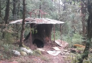 Creepy shelter